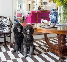 7 Dogs With A Serious Eye For Design  - Veranda.com