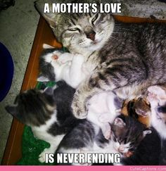 A mother's love.....