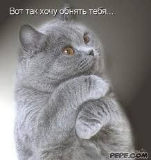 "Photo from album ""Коты"" on Yandex. Funny Cats And Dogs, Kittens And Puppies, Cats And Kittens, Animals And Pets, Baby Animals, Funny Animals, Cute Animals, I Love Cats, Cute Cats"