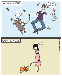 I've always been jealous of people walking down the street with their dogs, all I want to do is walk my cat too!