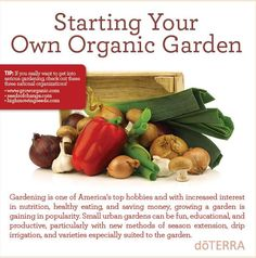 Are you wanting to start an organic garden this summer? Check out our latest blog posts for some great tips on how you can get started.
