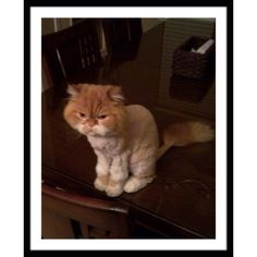 BUNDLES/OFFERS/DEALS THE QUALITY REMAINS AFTER THE PRICE IS FORGOTTEN!!! I LOVE MY CUSTOMERS!!! I WANT YOU TO HAVE A GREAT EXPERIENCE!!!❤️GIZZY IS MY SON'S CAT, JUST A HOOT!!! Other