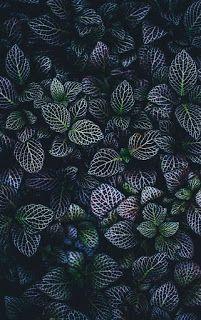 الكثير منا يبحث عن خلفيات ترمز للحب والرومانسية التي ستجدونها عبر موقعكم احلي صورة و تكون هادئة و مريحة لوضع Cute Love Wallpapers Love Wallpaper Love Flowers