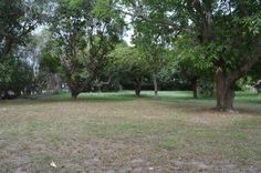 Another view which reveals over grown trees and other vegetation which needed routine care.