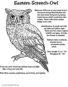 Barn Owl Diagram Outdoor Science School Activities For