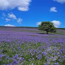 bluebells on dartmoor - Google Search