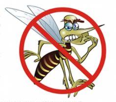 Uno de los estilos gráficos más usados en la representación ilustrada del mosquito Aedes Aegypti.
