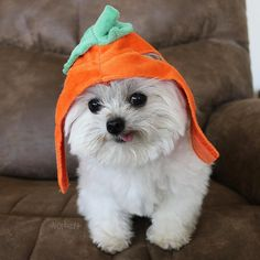 lil pumpkin :) #ILoveAutumn
