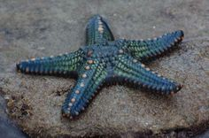 The Latest Weird Thing About Starfish - Neatorama
