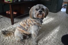Crochet Dog Sweater Picture - Pepper