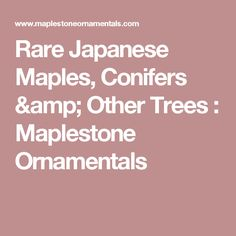 Rare Japanese Maples, Conifers & Other Trees : Maplestone Ornamentals