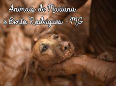 Tá Viajando Menina?: Animais da tragédia em Mariana e Bento Rodrigues -...