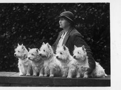 Mrs Pacey, Breeder and Judge, with Five of Her 'Wolvey' West Highland White Terriers Photographic Print