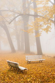 Benches in Lubostron park by powell ✿⊱╮
