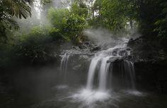 forest.jpg (3446×2239)