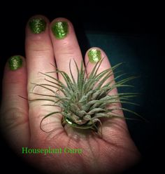 I was doing a houseplant presentation and wanted some appropriate jewelry so I made this ring with a Tillandsia ionantha.