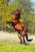I will have a horse like this..his name: Thunder Take the Lead..or Wildfire :)