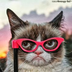 My favorite picture of grumpy cat!!!