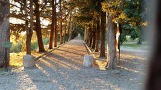 Filerimos In Rhodes Rhodes, Paths, Greece, Most Beautiful, Sidewalk, Island, Greece Country, Side Walkway, Walkway