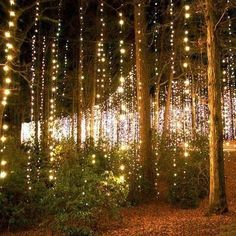 Starry String Lights, White String Lights, String Lights Outdoor, Outdoor Lighting, Lighting Ideas, Lights Hanging From Trees, Fairy Lights In Trees, Indoor Lights, String Lighting