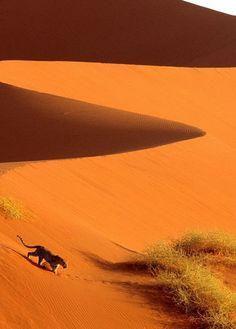 Leopard in the Namib Desert, Africa. BelAfrique your personal travel planner - www.BelAfrique.com