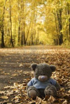 Awww! Teddy Bear In October