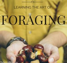 how to forage, saved for the many learning references in the article.
