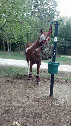 posts horse