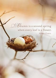 Autumn is a second spring when every leaf is a flower. ~Albert Camus Probably why Spring and Autumn battle for my affection every year. Mabon, Samhain, Albert Camus, Autumn Day, Autumn Leaves, Hello Autumn, Soft Autumn, Autumn Harvest, Harvest Time