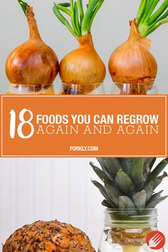 edible garden 18 Foods You Can Regrow Again And Again: All it takes is a little dedication, a bit of effort and some motivation! Indoor Vegetable Gardening, Home Vegetable Garden, Organic Gardening, Container Gardening, Veggie Gardens, Fruit Or Vegetable, Indoor Garden, Growing Veggies, Growing Herbs