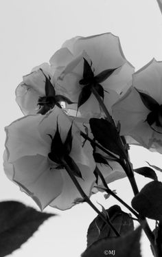 We all love black and white photos. What is it about a black and white photo we love so much? Pictures To Draw, How To Take Photos, Rose Garden Portland, Gardening Photography, Stained Glass Flowers, Black White Art, Garden Boxes, Creative Photos, Pure Beauty