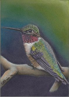 5x7 Painting Original Hummingbird Nature Wildlife Pastel Charcoal Pencil Bird