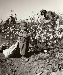 Image result for child cotton picker