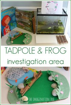 Set up a fun and hands on way to learn about nature with this tadpole and frog investigation area! Scientific observation and exploration for kids. Frog Activities, Spring Activities, Preschool Activities, Frogs Preschool, Science Area, Science For Kids, Science Books, Reggio, Frog Habitat