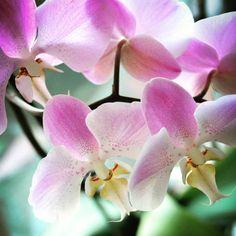 """8 Likes, 1 Comments - J E S S . M O R A . P H O T O (@jessmoraphotography) on Instagram: """"#coloradosprings #colorado #orchid #jessmoraphotography"""""""