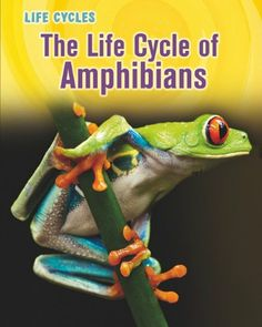 The Life Cycle of Amphibians (Life Cycles) by Darlene R. Stille,http://www.amazon.com/dp/1432949853/ref=cm_sw_r_pi_dp_Jshttb15EMPJCQ6T   ATOS 4.9, AR 1.0 pts