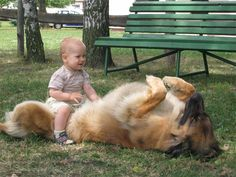 Yes, this looks like a good seat. I will sit here. The Leonberger does not seem to mind either, lol.