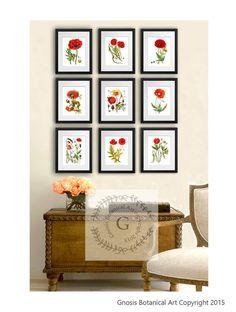 Red Poppies Prints set of 9 Memorial Day by GnosisBotanicalArt