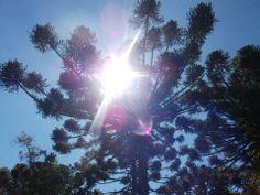 ¡Pinos y el sol! me gusta mucho de sacar fotos