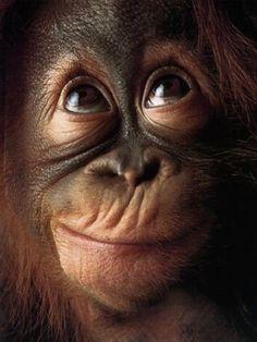 Monkey Face by Tim Flach