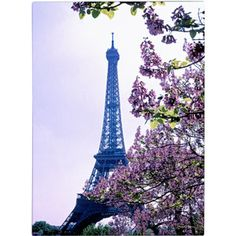 Trademark Art 'Eiffel Tower with Blossoms' Canvas Art by Kathy Yates