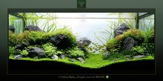 Online Aqurium Shopping: Secrets, Advice And Tips You Need Nature Aquarium, Planted Aquarium, Aquarium Fish, Aquarium Ideas, Aquascaping, Turtle Terrarium, Aquarium Maintenance, Aquarium Design, Paludarium