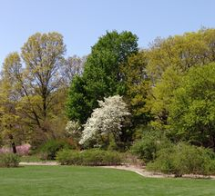 Living Collections Fellowship » Arnold Arboretum