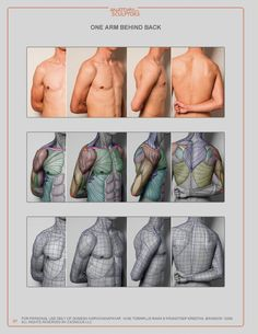 Exceptional Drawing The Human Figure Ideas. Staggering Drawing The Human Figure Ideas. Arm Anatomy, Human Anatomy Drawing, Human Body Anatomy, Anatomy Poses, Male Figure Drawing, Figure Drawing Reference, Guy Drawing, Anatomy Reference, Pose Reference