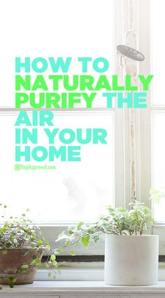 There are certain air purifying plants that are perfect for cleaning the air in your home. Learn the 15 best indoor plants to naturally purify your home so you can naturally purify indoor air. Easy House Plants, House Plants Decor, Plant Decor, Houseplants Safe For Cats, Home Air Purifier, Massage Room, Massage Place, Low Light Plants, Best Indoor Plants