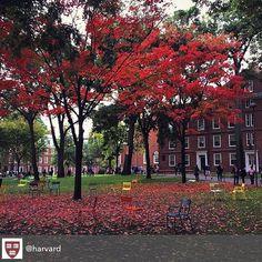 #Harvard -How do you make a great first impression?  #Job #VideoResume #VideoCV #jobs #jobseekers #careerservices #career #students #fraternity #sorority #travel #application #HumanResources #HRManager #vets #Veterans #CareerSummit #studyabroad #volunteerabroad #teachabroad #TEFL #LawSchool #GradSchool #abroad #ViewYouGlobal viewyouglobal.com ViewYou.com #markethunt MarketHunt.co.uk bit.ly/viewyoupaper #HigherEd @harvard