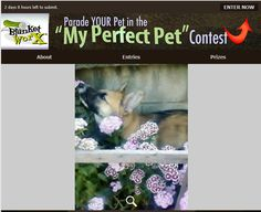This is my lil guy, Bug. He's part wolf, and Beagle. I also own his brother Gideon. Bug is the light of my life. He always takes time to smell the flowers...    Share your pet's photo for a chance to win a chance to win one of 7 beautiful photo gifts!  Submit their photo here http://www.myperfectpetcontest.com  and for more great ways to showcase your photo memories visit BlanketWorx