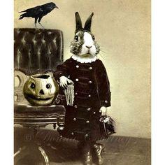 HALLOWEEN  Beau Bunny Rabbit .