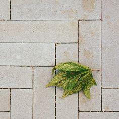 #fall #leaf #sidewalk photo by happymundane on Instagram