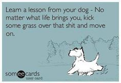 Learn a lesson from your dog - No matter what life brings you, kick some grass over that sh#t and move on.